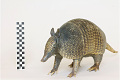 View Nine-banded Armadillo, Long-nosed Armadillo digital asset number 3