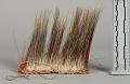 View Quill Headdress (Roach) digital asset number 1