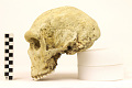 View Petralona 1, Fossil Hominid digital asset number 2