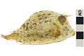 View Trunkfish digital asset number 3