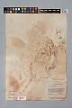 View Palicourea jenmanii (Wernham) Delprete & J.H. Kirkbr. digital asset number 6