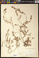 View Euphorbia sp. digital asset number 0