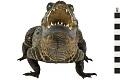 View Marsh Crocodile, Mugger Crocodile digital asset number 2