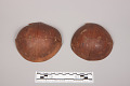 View Coconut Shell Cups digital asset number 2