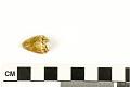View Mollusk Egg Case digital asset number 3