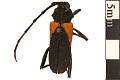 View Long-horned Beetle digital asset number 0