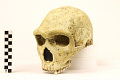 View Petralona 1, Fossil Hominid digital asset number 3