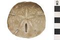 View Keyhole Sand Dollar digital asset number 3