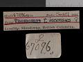 View Thomomys talpoides incensus Goldman, 1939 digital asset number 0
