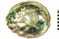 View Red Abalone digital asset number 0