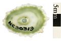 View Barbados Keyhole Limpet digital asset number 0