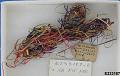 View Basket-Material digital asset number 0