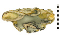 View Bryozoan digital asset number 1