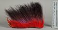 View Hair Headdress (Roach) digital asset number 0