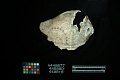 View Large Conch Shell Dipper Section, Engraved digital asset number 3