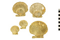 View Fossil Scallop, Scallop digital asset number 0