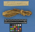 View Botanical Specimens From Quileute Indians digital asset number 5