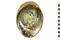 View Green Abalone digital asset number 0