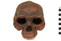 View Zhoukoudian, Early Human, Fossil Hominid digital asset number 4