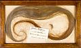 View Mammuthus primigenius (Blumbach) digital asset number 0