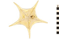 View Starfish digital asset number 1
