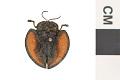 View Tortoise Beetle digital asset number 0
