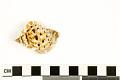 View Frilled Frog Snail, Frilled Frog Shell digital asset number 2