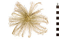 View Feather Star digital asset number 0