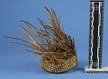 View Materials For Making Baskets digital asset number 7