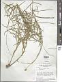 View Monnina stenophylla A. St.-Hil. digital asset number 1