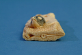 "View ""Netsuke"" Toggle For Suspending Small Objects digital asset number 3"