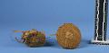 View Materials For Making Baskets digital asset number 4