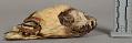 View Decorated Raccoon Skull Medicine digital asset number 0
