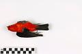 View Scarlet Tanager digital asset number 3