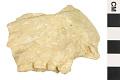 View Fossil Ape, Fossil Primate, Fossil Primate digital asset number 0