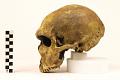 View La Ferrassie 1, Neanderthal Man, Fossil Hominid digital asset number 2
