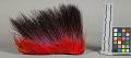 View Hair Headdress (Roach) digital asset number 3
