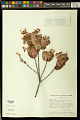 View Blepharandra cachimbensis W.R. Anderson digital asset number 0