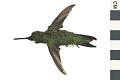View Ruby-throated Hummingbird digital asset number 0