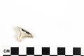 View Fossil Shark, Weasel shark, Snaggletooth shark digital asset number 4