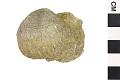 View Brachiopod, Strophomenid Brachiopod digital asset number 1