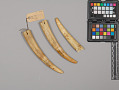 View Young Walrus Teeth (3) digital asset number 0