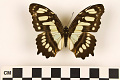 View Malachite Butterfly digital asset number 2
