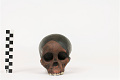 View Taung Child, Fossil Hominid digital asset number 2