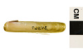 View Sickle Jackknife Clam digital asset number 1