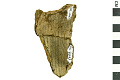 View Pope's Creek Ware Sherd, Prehistoric Pottery Fragments digital asset number 0