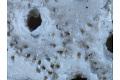 View Bryozoa digital asset number 2