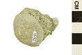 View Bryozoan digital asset number 0