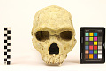 View Petralona 1, Fossil Hominid digital asset number 4