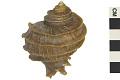 View Murax Snail digital asset number 2